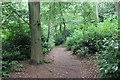 SJ2738 : Woodland Walk at Chirk Castle by Jeff Buck