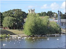 SX9192 : River Exe upstream of Cricklepit Bridge by David Smith