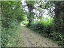 ST5707 : Bridleway, Melbury Osmond by Maurice D Budden