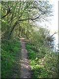 SP4508 : The Thames Path near Eynsham by David Purchase