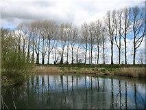 SU2398 : The River Thames near Buscot by David Purchase
