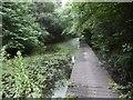 NZ3842 : Boardwalk, Pesspool Wood by Richard Webb