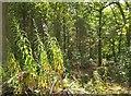 SX8375 : Newpark Plantation by Derek Harper