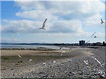 SD4464 : Squabbling seagulls by Philip Platt