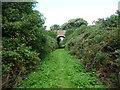 SC3190 : Bridge over the footpath, south of Glen Wyllin by Christine Johnstone