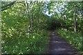 NZ4026 : Castle Eden Walkway by Richard Webb