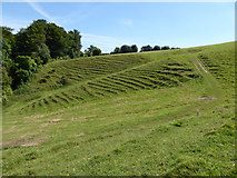 ST5906 : Hillside and footpath above St Edwold's Church, Stockwood by Maurice D Budden
