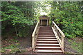 NS5320 : Steps to the Beautiful Woodland Shelter by Billy McCrorie