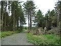 SC2276 : Entrance to Kerroodhoo Plantation by Christine Johnstone