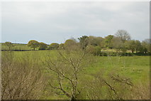 SW9551 : Cornish Countryside by N Chadwick