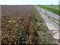 TF5604 : Concrete road crossing Stow Bardolph Fen by Richard Humphrey