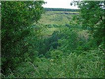 D2119 : Glenariff Forest Park (1) by Carroll Pierce