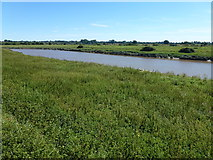 TF5902 : The River Great Ouse near Downham Market by Richard Humphrey