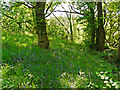 NY4552 : Woodland, Quarry Banks Nature Reserve by Rose and Trev Clough