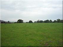 SK1533 : Grazing, Oaks Green Farm by JThomas