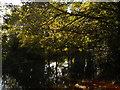 TF1409 : River Welland viewed from Welland Walk, Market Deeping by Paul Bryan