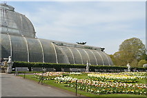 TQ1876 : In the Palm House by N Chadwick