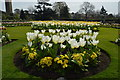 TQ1876 : Flowerbed of tulips, Kew Gardens by N Chadwick