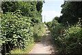 SJ5372 : Track to Pinewood Farm by Jeff Buck