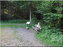 NZ1458 : Chopwell Wood: Pitman's Seat by Anthony Foster