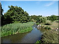 TQ4871 : Paddling in the River Cray at Foots Cray Meadows by Marathon