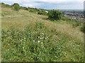 SU6306 : Chalk downland on  Portsdown Hill by Marathon