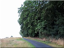NZ1265 : Woodland on edge of golf course near Ravens Dene by Andrew Curtis