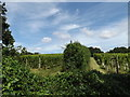 TL9670 : Wyken Vineyards by Adrian Cable