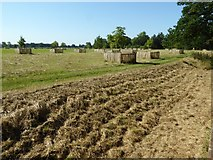 SO8844 : Newly planted trees in Croome Park by Philip Halling