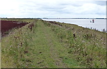 SE8924 : Path along the bank of the River Humber by Mat Fascione