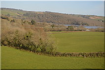 SX4563 : View towards the River Tavy by N Chadwick
