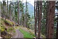 NH4215 : Steep descent to Invermoriston by Jim Barton