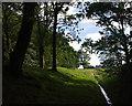 SD3075 : Beach Wood, Conishead Priory by Ian Taylor