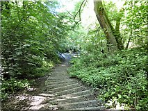 SJ9594 : Steps into Gower Hey Woods by Gerald England