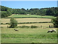 SU7885 : Grazing sheep near Mill End by Peter S