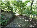 SJ9594 : Footpath into Gower Hey Wood by Gerald England