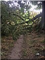 SE3806 : Mucky Lane is blocked by Steve  Fareham