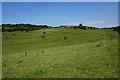 ST7476 : Strip lynchets on Hinton Hill by Bill Boaden