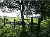 H5472 : Gate and trees, Bracky by Kenneth  Allen