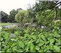 SJ9598 : Pond in Stamford Park by Gerald England