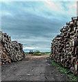 SJ6894 : Log Stacks, Little Woolden Hall Farm by Matt Harrop