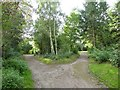 SJ8748 : Festival Park: path junction in the woods by Jonathan Hutchins