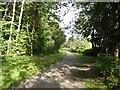 SJ8748 : Festival Park: path through the woods by Jonathan Hutchins