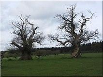 SO4465 : Chestnuts, Croft by Richard Webb