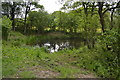 TQ3536 : Small wooded pond by N Chadwick