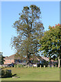 SP3780 : Big old lime tree, Caludon Castle Park, Wyken, Coventry by Robin Stott