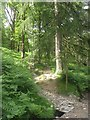 NY3204 : Footpath in Sawrey's Wood by Graham Robson