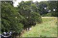 NZ0384 : River Wansbeck downstream of the ornamental bridge by Christopher Hilton