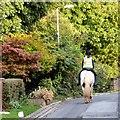 SJ9493 : Horesrider on Apethorn Lane by Gerald England