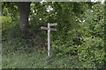 TQ3637 : Footpath junction, Sussex Border Path by N Chadwick